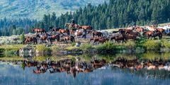 Bringing the horses to water