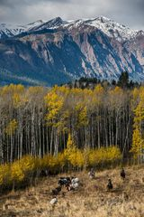 cowboy, western, Large format, cowgirl, ranch, museum, fine art, print, jess lee, artist, photographer, limited edition, high quality, high resolution, beautiful, artistic, , bears, wolves, mountains,