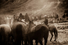 cowboy, western, Large format, cowgirl, ranch, museum, fine art, print, jess lee, artist, photographer, limited edition, high...