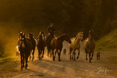 Wyoming Cowboy bring his Cavy or herd and stock dogs into camp for the morning roundup, cowboy, western, horses, stock, dogs, cavy, morning., Peter Lik, cowgirl, ranch, museum, fine art, print, jess l