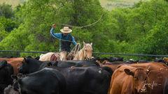 Buckaroo Cowboy Roping
