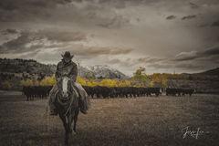 Cowboy Autumn Roundup