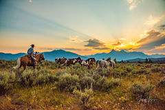 Picture of cowboy riding a horse and herding horses into the Wyoming sunset, western, Large format, cowgirl, ranch, museum, fine art, print, jess lee, artist, photographer, limited edition, high quali