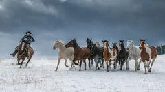 Turning the Herd | cowboy herding horses in snow