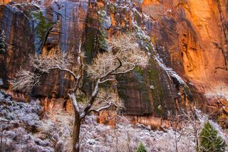 Zion Red Rocks and Snowy Trees