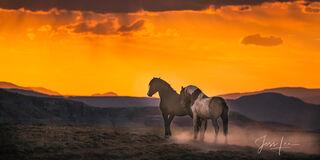 cowboy, western, Wild Horse Photo, Wild mustang, Photography, photo, print,