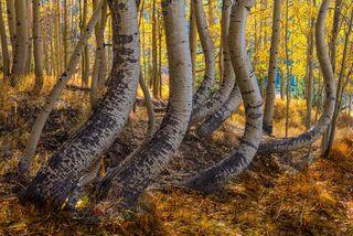 Colorado, San Juan, mountains, Autumn,