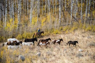 cowboy, western, Large format, cowgirl, ranch, Cowgirl, horses, autumn, fall, aspen trees, museum, fine art, print, jess lee, artist, photographer, limited edition, high quality, high resolution, beau