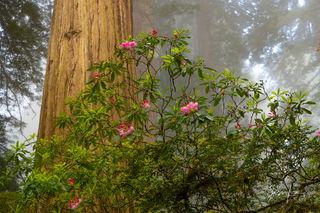 California, redwoods,national park, beautiful, yosemite, mountains, desert, death valley, ocean,