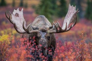 Fine Art Wildlife Photography prints By Jess Lee