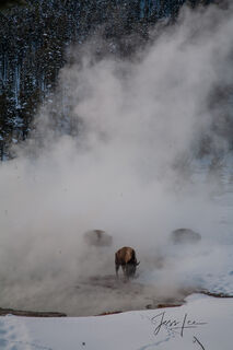 Yellowstone, national park,