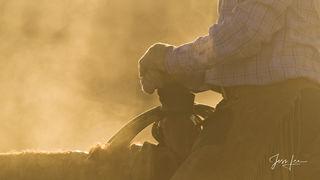 Morning break | Cowboys hands on steamy horse
