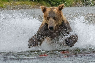 Bear Photos | Black Bears | Polar Bears | Grizzly Bears