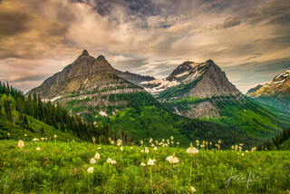 Glacier national park bear grass and mountains.