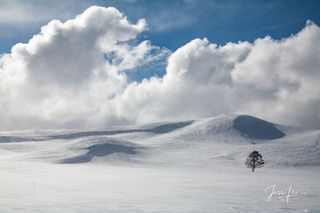 Lone tree out standing in beautiful snow draped hills photograph. , winter,