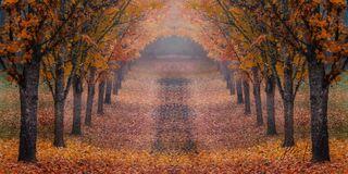 Oregon Autumn Tree Trail Panorama