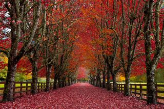 Beautiful Trees Photo Gallery