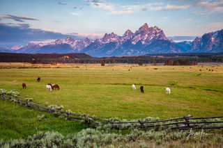 bears, wolves, mountains, teton, horses, wildlife, snow, trees, cowboy, western, Large format, cowgirl, ranch, museum, fine art, print, jess lee, artist, photographer, limited edition, high quality, h