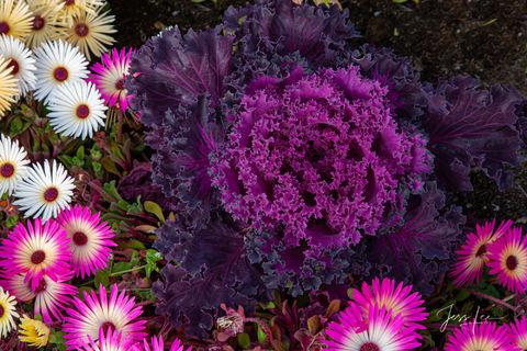 Spring brings an abundance of flowers blooming in Alaska.