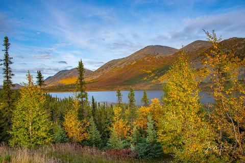 Morning on Alaska's arctic tundra.