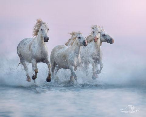 Camargue, France, Idaho, Idaho equine photographers, Provence, Tamara Gooch, Tamara Gooch Photography, Tamara Gooch photography workshops, assignment, commercial, commissioned, editorial, equestrian,