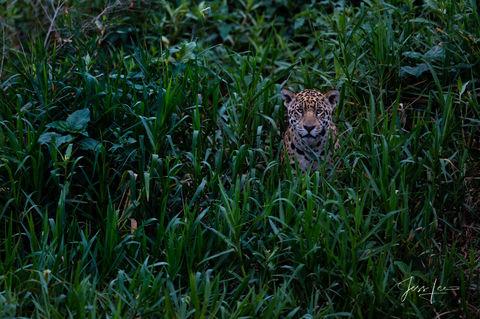 Wildlife Photos | Fine Art Prints | Animal Pictures