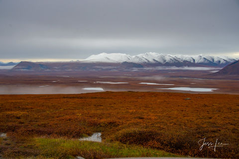 Tundra north of the Brooks Range in Alaska during autumn. Snow covers the mountain peaks.
