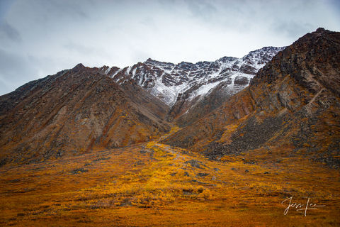 Autumn colors engulfing the side of a mountain in Alaska