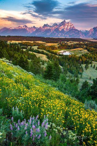 Vertical Landscape Photo Gallery  | Luxurious Nature Prints