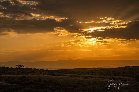 Lone Stallion at sunrise