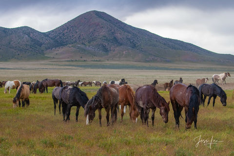 Large format mustang horse photos, quality, museum, fine art, print, jess lee, artist, western, cowboy, photographer, limited edition, high quality, high resolution, beautiful, artist, wildlife, , B