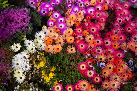 Patch of Alaskan flowers showing off their beautiful colors.