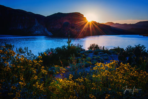 Sunrise over Apache Lake in Arizona, with a patch of beautiful spring flowers in the foreground.