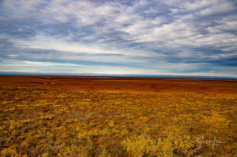 Arctic plain covered in hardy plant life.