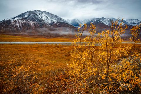 Alaskan trees changing color as Autumn sets in.