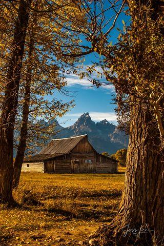 Teton Barn Framed by Cottonwoods