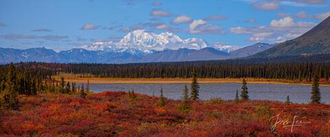 Fall color in Alaska