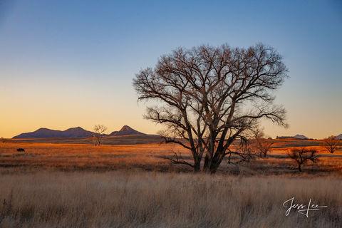 Sunset over the Arizona grasslands.
