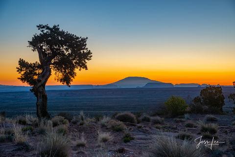 Native tree bowing to the Navajo mountain in Arizona