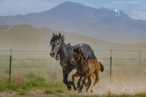wild horse Large format, quality, museum, fine art, print, jess lee, artist, photographer, limited edition, high quality, high resolution, beautiful, artist, wildlife, , B