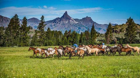 Pilot Peak Horse Herd