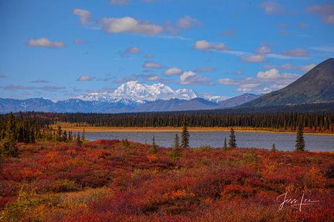 Autumn colors shown engulfing the Denali tundra