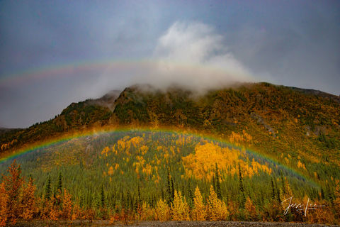 Autumn colored trees in the Arctic surrounded by a rainbow after heavy rainfall