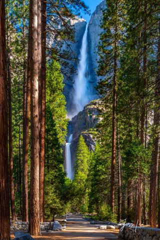 Yosemite Falls in California's Yosemite National Park. A well-maintained trail winds through a forest of evergreens.