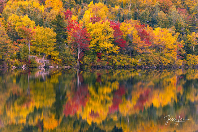 New England Autumn Tree Reflection