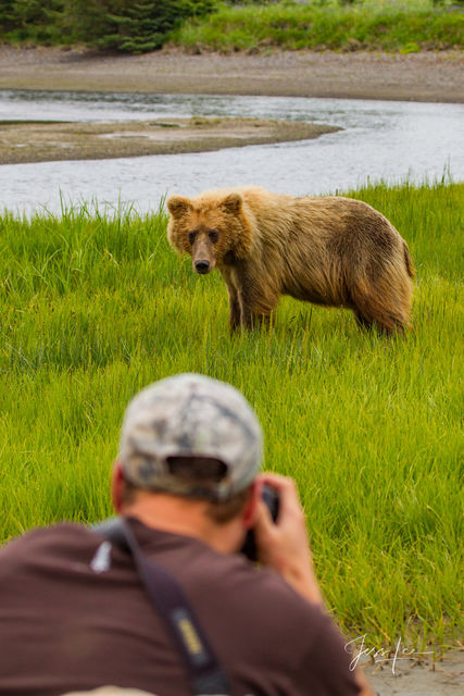 Brown Bear Photographer