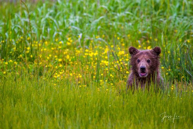Brown Bear Baby Photo