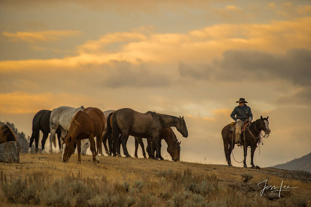 Watching Over the Herd | Wyoming Cowboy Photograph Print