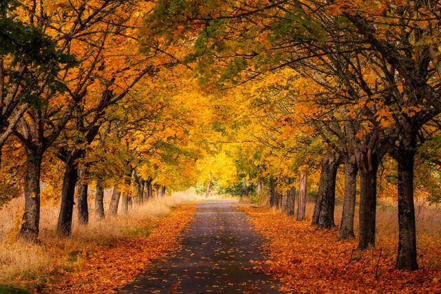 Golden Autumn Road