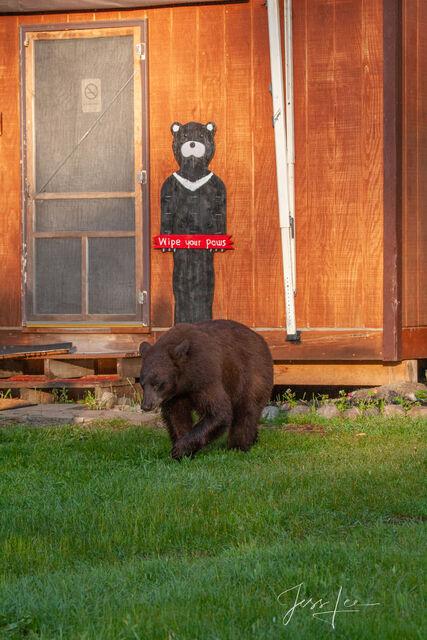 Black Bear at a cabin